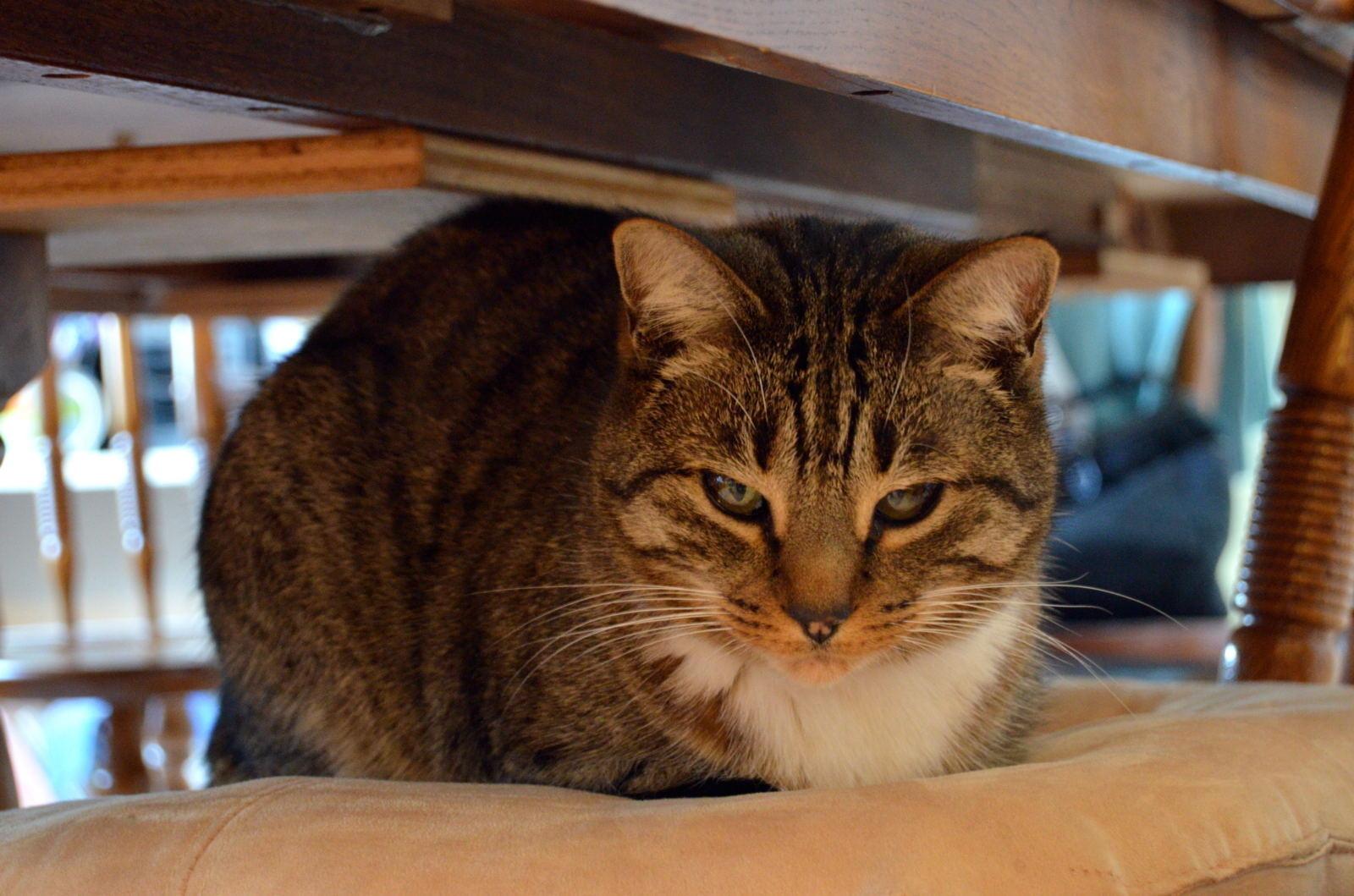 ペット可のマンションはどのペットも可なのか?