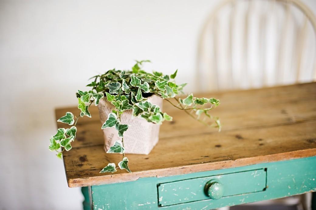 枯れかけた植物を復活させる方法