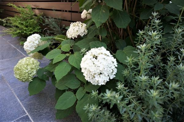 下調べが重要!庭に植えて「よかった植物」&「失敗だった植物」