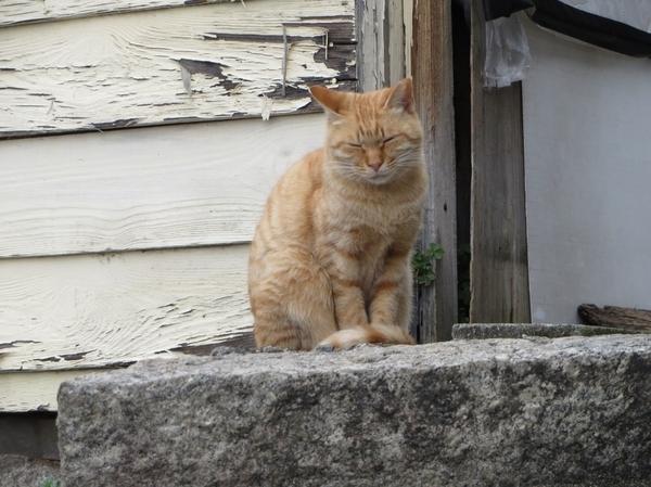 飼えなくても癒される! 東京23区「猫の多いまち」勝手にベスト5