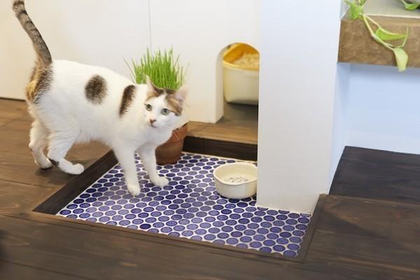 猫が快適に暮らせる家