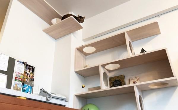 愛猫家たちがこだわり抜いたキャットウォークがある空間