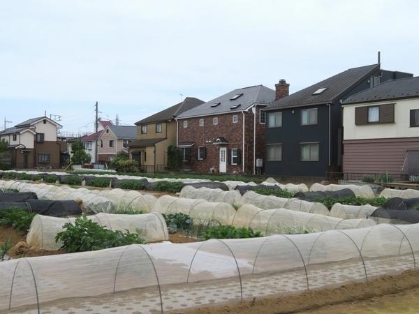 子どもの食育に最適。都内でも区民農園で野菜作りができるまちがある