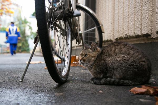 人懐っこい人と動物がいっぱい! 人情が息づく昭和レトロな「立石」の商店街