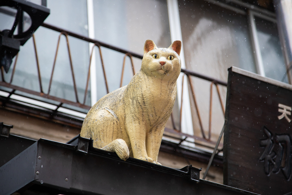 理想的にノスタルジック! 猫の街「谷根千」の商店街