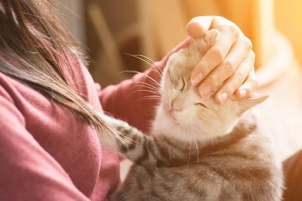 ペットと幸せに暮らす条件を、住まいから考える