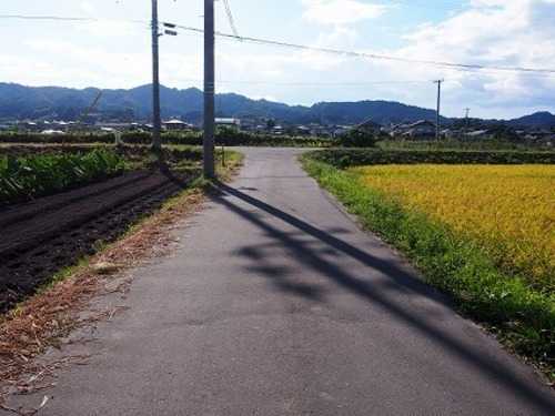現況写真 南側 前面道路(東側から撮影)