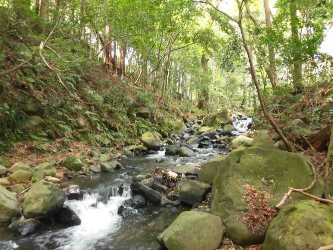 現況写真 隣接地に流れる川