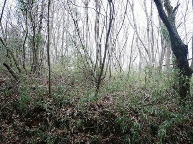 現況写真 緑に囲まれた自然あふれる環境です!
