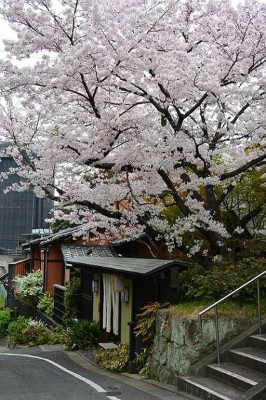 外観・現況 春には表の桜が満開になります