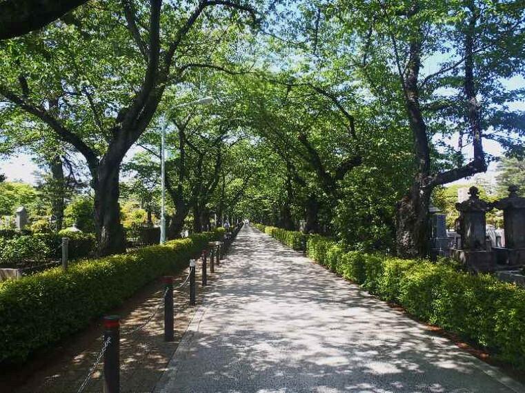 公園 【公園】南青山三丁目緑地まで556m