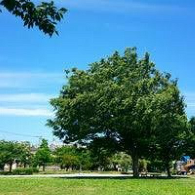 公園 【公園】原町田青空ひろばまで1094m