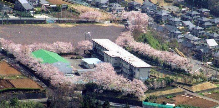 小学校 函南町立桑村小学校