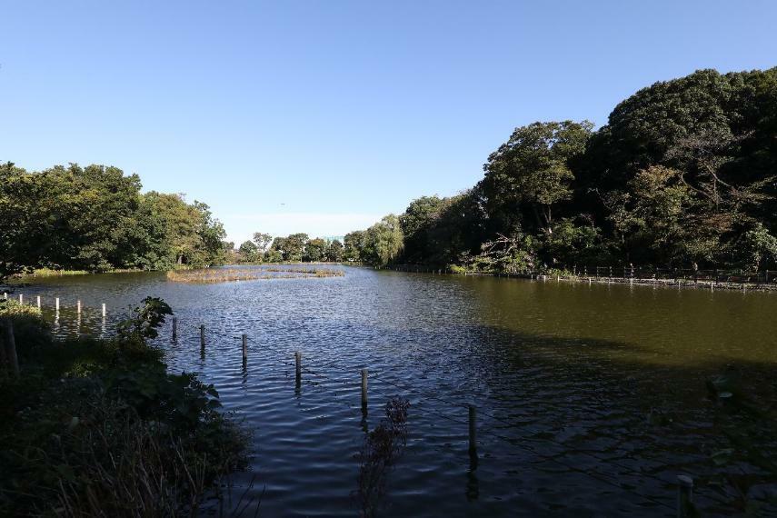 公園 【善福寺公園】武蔵野三大湧水池のひとつとして知られ、公園全体の半分近くを占める広大な善福寺池に癒される憩いのスポットです。緑豊かなスポットで、水鳥やカワセミの姿も見ることができます。