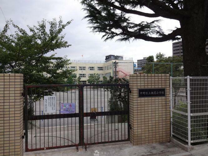 小学校 中野区立桃花小学校 徒歩8分。
