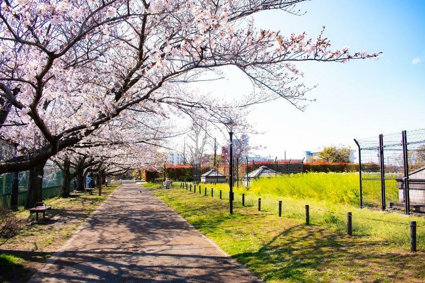 公園 井草森公園