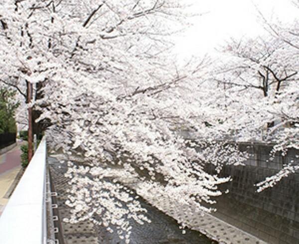 【その他】神田川四季の道まで805m