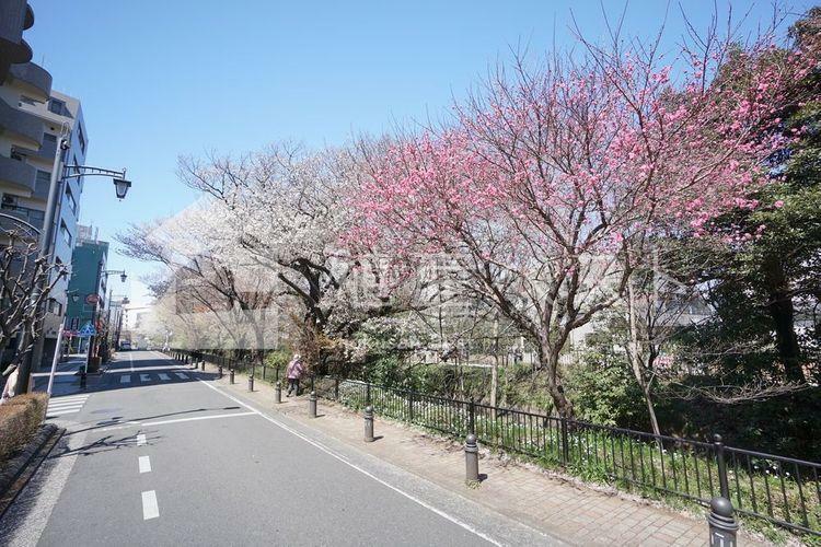 三鷹駅のロータリーから井の頭公園へまっすぐ伸びる「風の散歩道」は、玉川上水に沿って歩くインターロッキング舗装の緑と桜を感じるお散歩コースです。