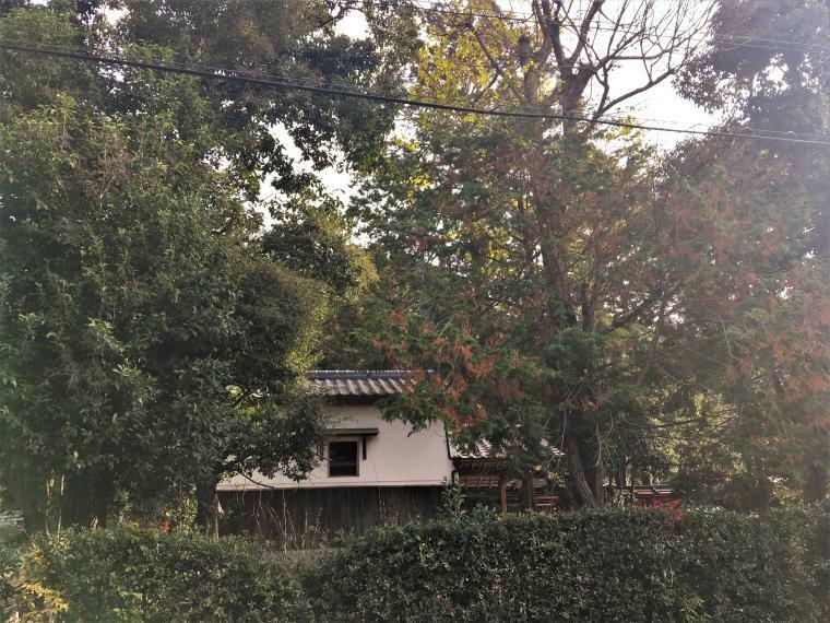 (2020.12.10撮影)向かいに望む三宅八幡宮の境内