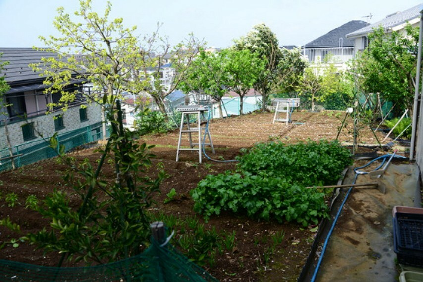 庭 敷地内にある50坪以上の広々家庭菜園。