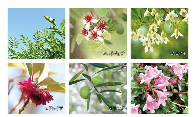 現況写真 四季を華やかに彩る植栽計画。 周辺環境との調和、そして建物デザインとの呼応に配慮した植栽をプランニング。