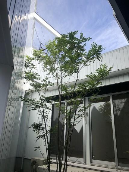 庭 1階の居室からも望める中庭には、緑の映える植栽が設えられております。