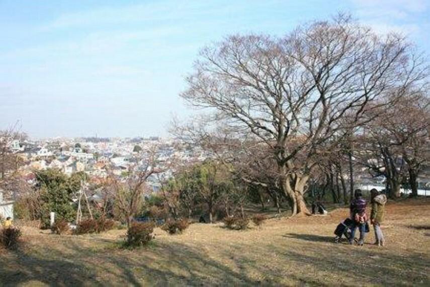 公園 白幡の森