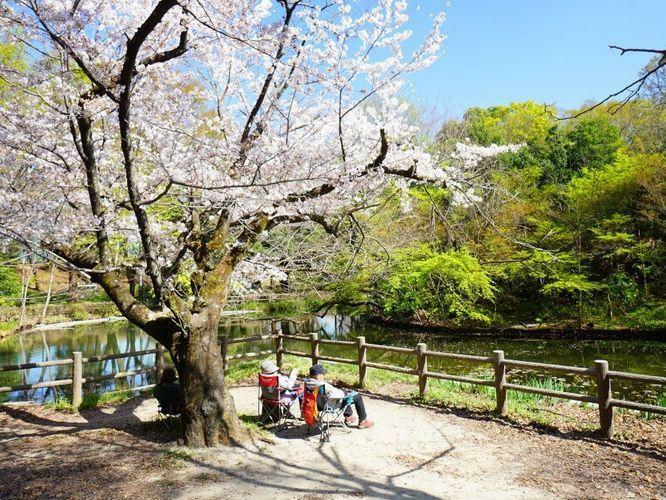 物件のすぐ近くには杉並区でも最大級の公園「和田掘り公園」があります。春には桜が咲き、お散歩には最適な環境ですよ