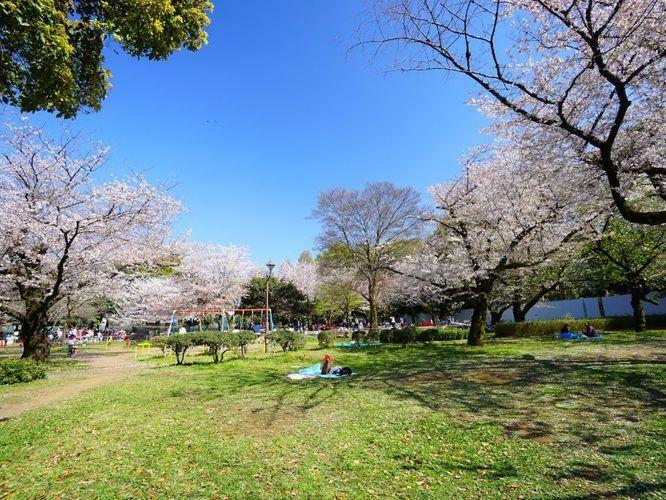 和田掘り公園には広々とした広場があり、春にはお花見客で賑わいを見せます。お子様が全力で走り回われる広さは、きっとテンションがあがる筈ですよ。