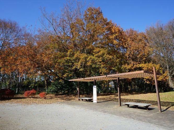 魅力は春だけではなく、当然に秋は紅葉を楽しむことが出来ます。郊外に出かけなくても紅葉を楽しむことが出来るのは嬉しいですね。