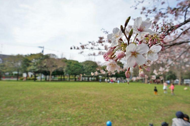 公園 徒歩11分。 善福寺川緑地公園は春になると川沿いに桜が咲き乱れるお花見の名所です 徒歩14分。