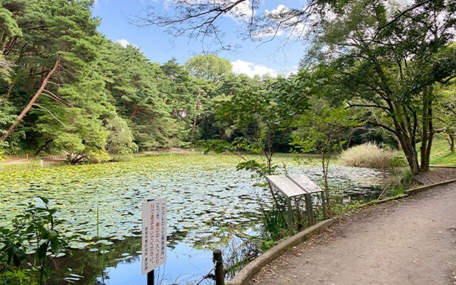 じゅんさい池公園