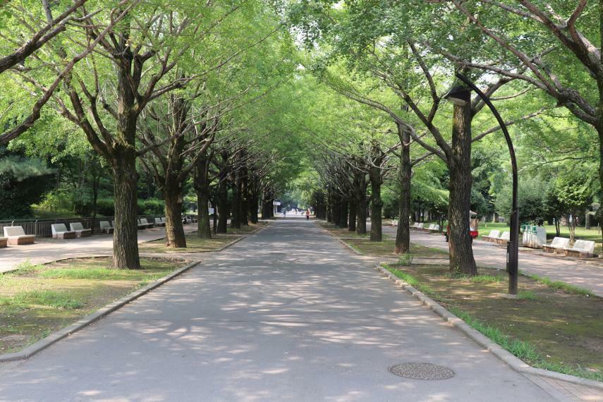 公園 都立光が丘公園