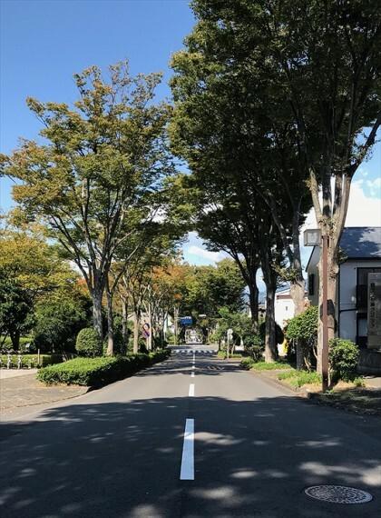 現況写真 分譲地から200mで美しい並木道に。季節の変化を感じられる、静鉄の駅と県立美術館をつなぐ坂道です。 令和2年10月撮影