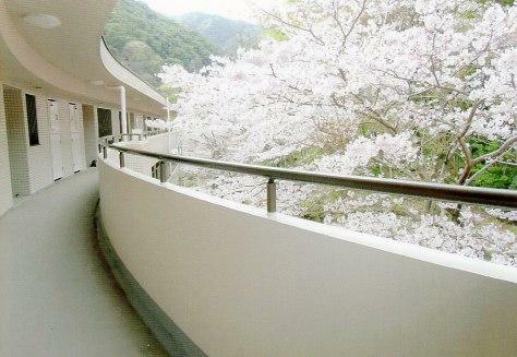 中庭 お部屋の前の廊下より中庭を望みます