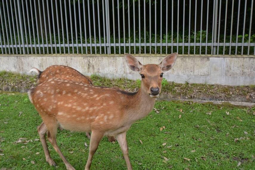 公園 奈良公園 まで 徒歩27分 または自転車11分