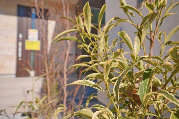 玄関までのアプローチ部分には鮮やかな植栽がお出迎え。毎日をウキウキした気持ちにさせてくれますね。