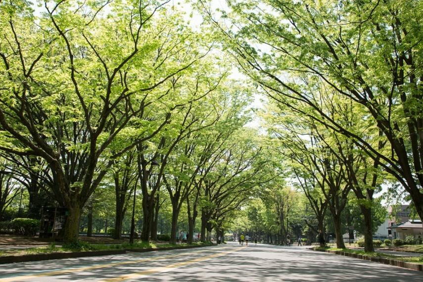 公園 駒沢公園(徒歩17分)