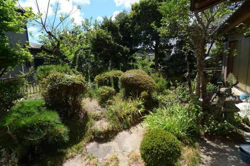 庭 庭木多く緑豊かな庭です