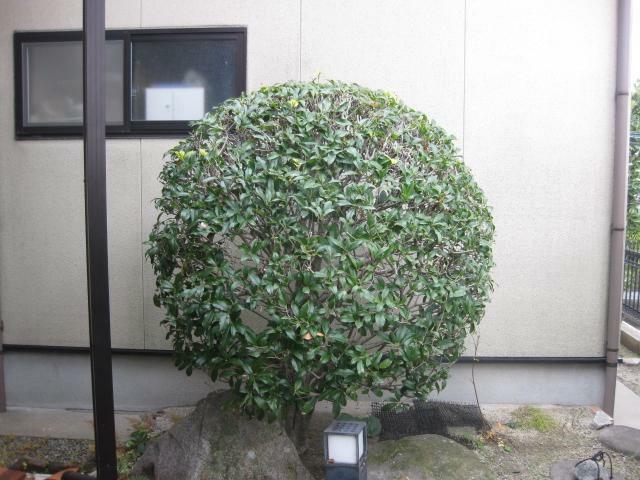 庭 事務所横の植栽