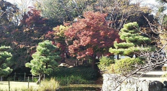 公園 秋葉公園 徒歩13分。