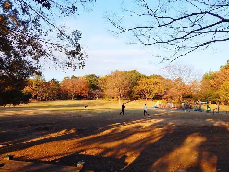 公園 王禅寺ふるさと公園まで620m 住宅街の中にある豊かな自然に包まれた広大な敷地の自然公園です。広~い芝生広場に遊具もあり、森林を散策するとゆったりとした雰囲気に浸れます。