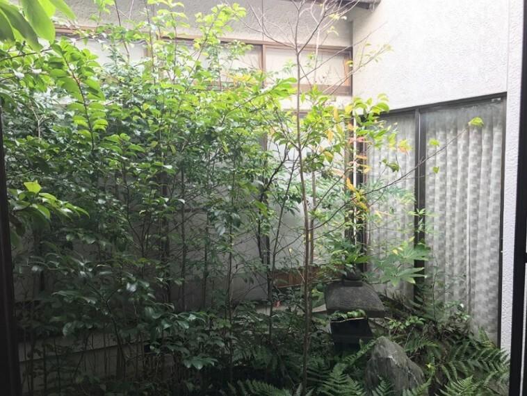 中庭です。和風の雰囲気のお庭になっています。
