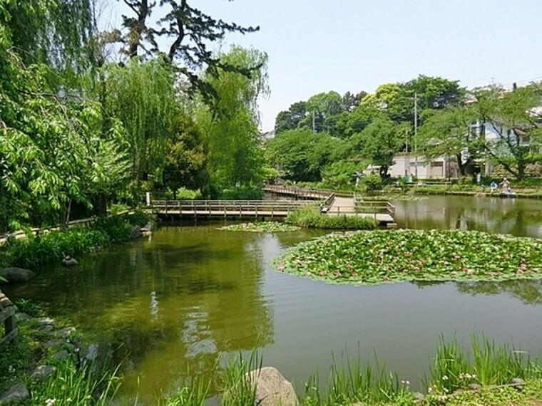 公園 白幡池公園 公園のシンボル白幡池の上を渡るように設計された遊歩道があり、翠の水辺の潤いを感じることのできる都市のオアシス的存在です
