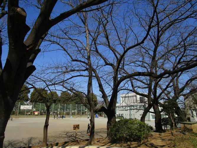 現況写真 駅からの道 西大井広場公園