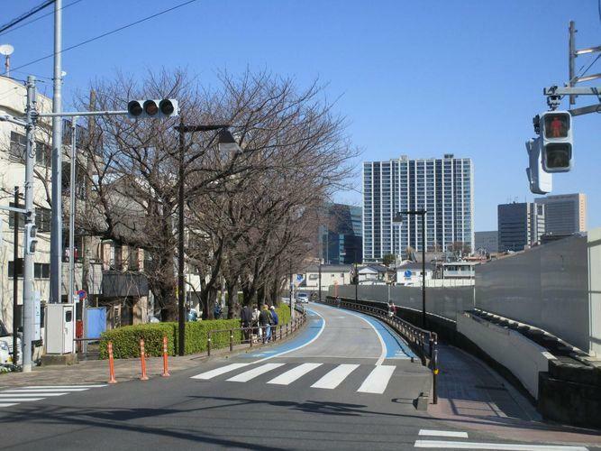 現況写真 立会道路 桜並木