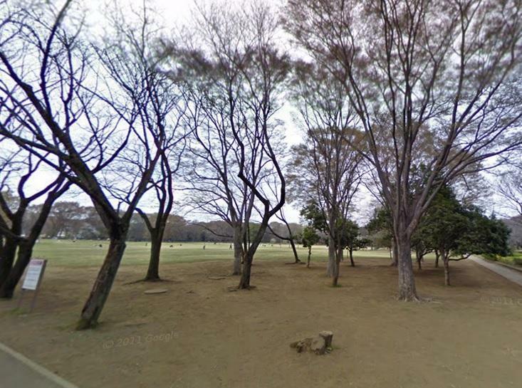 公園 小金井公園