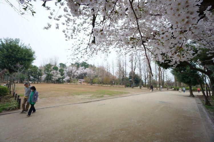 公園 羽根木公園 徒歩9分。