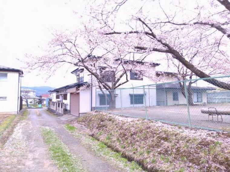 【周辺環境】西側の隣接地は平泉町の公園となっています。桜の木が植えてあるので春の満開の時期は綺麗ですね。