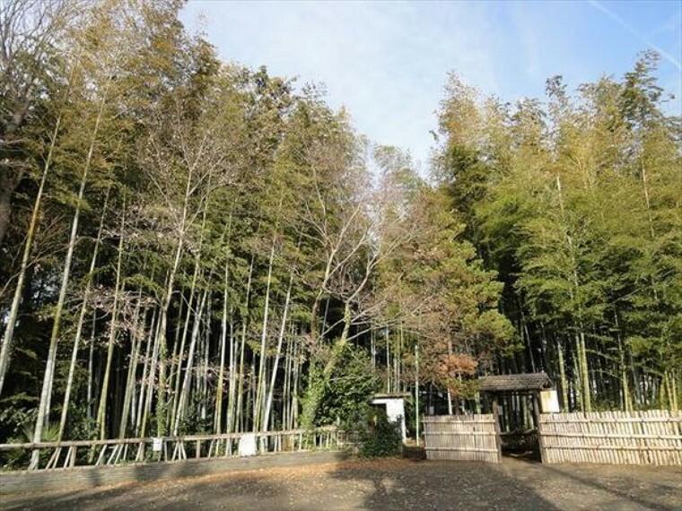 公園 竹林公園